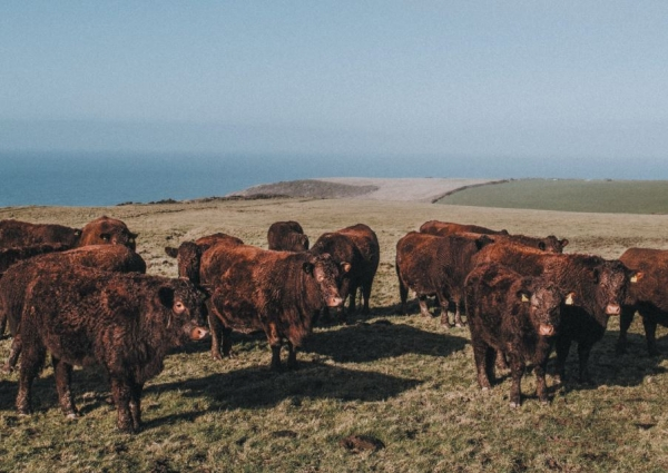 Locally led inquiry report: Devon - Grasslands and livestock production