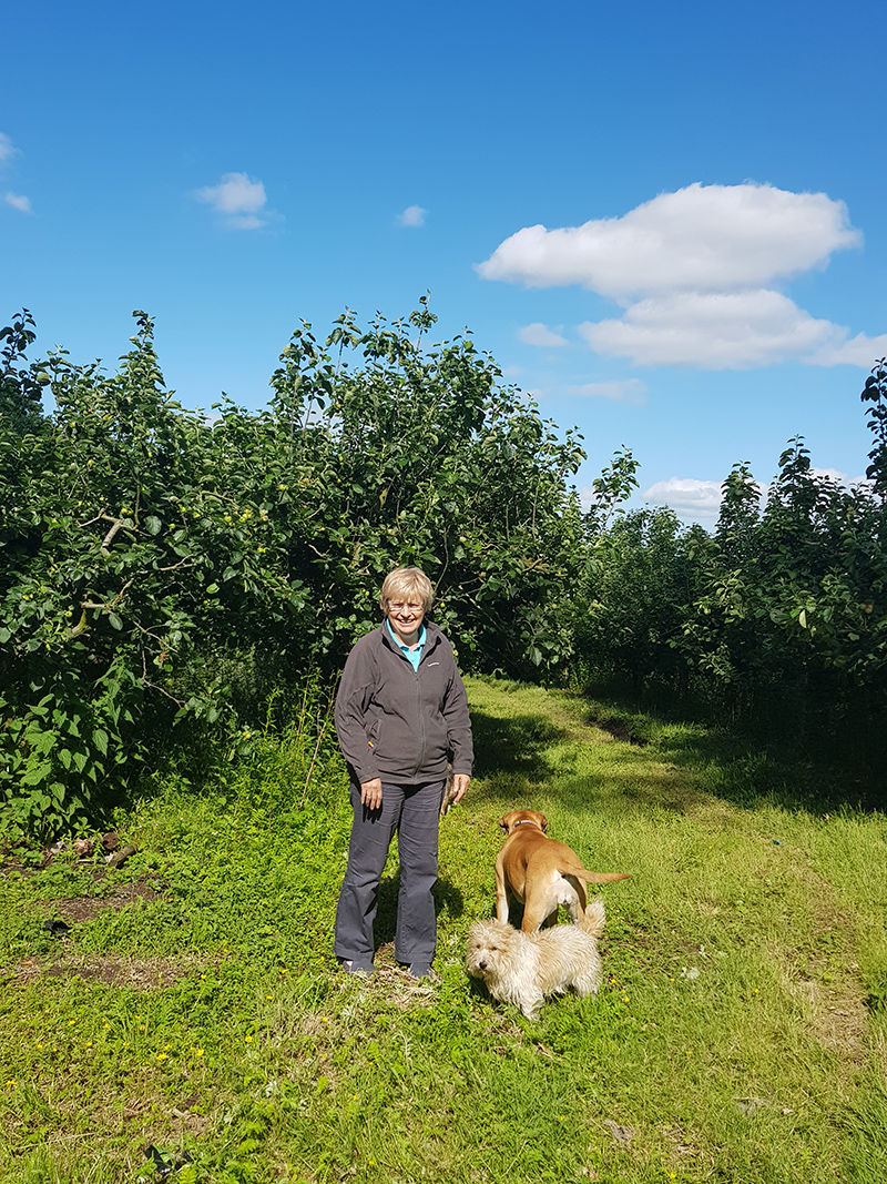 Helen and her dogs on her orchard, which has been in her family for five generations.